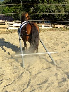 homemade+horse+harness | Discuss Home-made simple harness