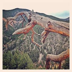 Romulo Mayo ‏@RomuloMayo Dead tree on cliff in #eldorado #springs #canyon #colorado #nature #thegreatoutdoors #beauty #hiking #mountain #t... pic.twitter.com/JbyLhCSjxw