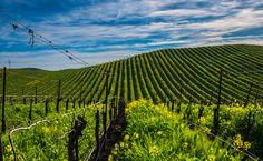 Carneros, gran esperanza blanca de California | Wine Magazine entusiasta
