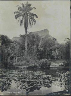Antonio Caetano da Costa Ribeiro. Jardim botânico, c. 1914. Rio de Janeiro, RJ…