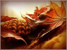 Dry Orange by Tiziana Orru' @ http://adoroletuefoto.it