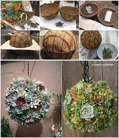 Welcome to the diy garden page dear DIY lovers. If your interest in diy garden projects, you'are in the right place. Creating an inviting outdoor space is a good idea and there are many DIY projects everyone can do easily. Garden Inspiration, Plants, Planting Flowers, Hanging Succulents, Succulents, Diy Garden, Container Gardening, Garden, Garden Projects