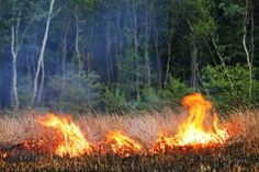 Wild fires can be deadly. Follow these tips to keep your Hill Country home safe!