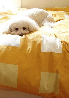 Love is a white Maltese Puppy napping in Ray of Sunshine on a and White bed; Cute Puppies, Cute Dogs, Dogs And Puppies, Teacup Puppies, Doggies, Poodle, Animals And Pets, Cute Animals, Baby Animals