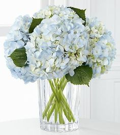 bright spring wedding colors - Google Search: Hydrangeas!