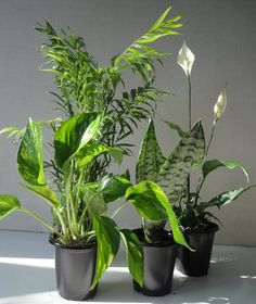A set of four pre-potted plants to add an extra splash of greenery to your home or work space. | 20 Awesome Products From Amazon To Put On Your Wish List