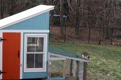 Raen's Member Page - BackYard Chickens Community