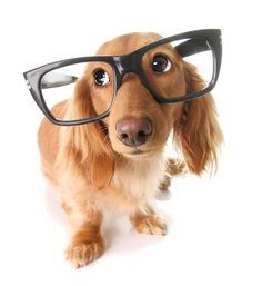 pretty dog wears glasses
