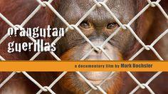 CineCoup: Orangutan Guerillas