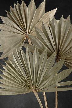 """24"""" Dried Natural Fan Palm Leaves Fronds (5 leaves/bundle ) $4.99 bundle/ 3 bundles $ 4 each"""