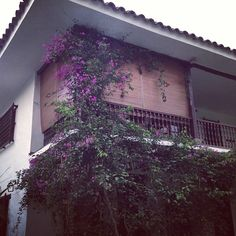 Sólo un lugar así de mágico pudo haber inspirado a Jorge Isaacs a escribir una historia de amor como La María… Valle del Cauca