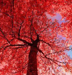 red thing by *KariLiimatainen