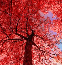 Red Thing By Kariliimatainen Lady In Things Tree I