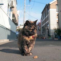 NEKOくらぶ (@nekoclub_jpn) • Photos et vidéos Instagram赤い鈴「この歳になって、ちょっと派手じゃないかしら?」#ねこ #猫 #cat #gato #chat #外猫 #straycat #ねこ部 #ふわもこ部 #猫好きさんと繋がりたい #cutecats #followme  #Regram via @kiyochan_cats Cat Coffee Mug, Cat Mug, Pet Cats, Cats And Kittens, Japanese Cat, Cat Food, Neko, Funny Cats, Cute