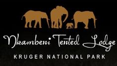 Nkambeni Tented Lodge in Kruger National Park. Kruger National Park, National Parks, Tent, Safari, Camping, Travel, Campsite, Store, Tents