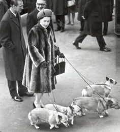 The Queen And Her Corgis -   (pssst the olympics are soon approaching!!!)