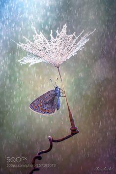 Sotto l'ombrello by Radeski #nature #photooftheday #amazing #picoftheday
