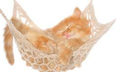 Preview wallpaper cat, hammock, kitten, red, fluffy