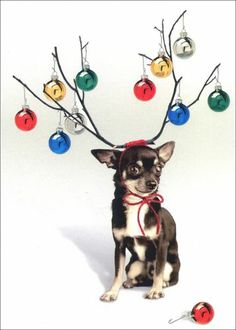 Little Dog Big Antlers Boxed Christmas Cards 10 Greeting Cards by Avanti Press | eBay