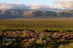 View from Elandsberg cottages  to Gannaga Pass in the Tankwa Karoo