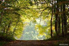 Photo: Waldweg im Herbst