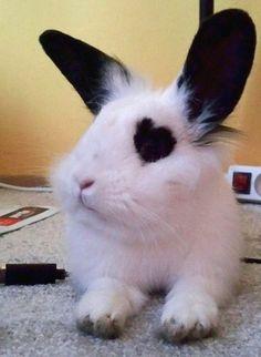 The Cute Rabbit Pets - Page 27 of 28 - Gloria Love Pets Cute Baby Bunnies, Funny Bunnies, Cute Baby Animals, Funny Animals, Cutest Bunnies, Animal Original, Animal Help, Pet Rabbit, Hamsters