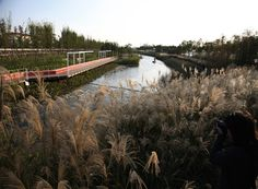 Image 14 of 29 from gallery of Shanghai Houtan Park / Turenscape.