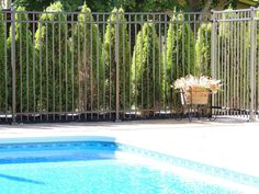high black three rail ornamental aluminum fence around swimming pool. Dog Fence, Brick Fence, Front Yard Fence, Fence Art, Farm Fence, Metal Fence, Gabion Fence, Glass Fence, Stone Fence