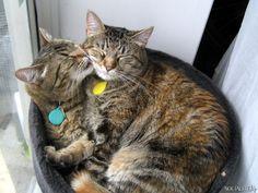 two headed cat, lol