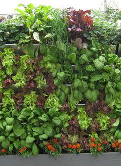 vertical gardening | Vertical Gardening Insider