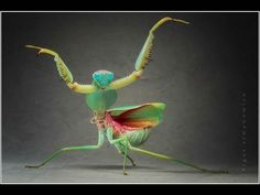 Shoulda known: praying mantis are super heros - in a different dimension! Mahalo Visual Arts on facebook for the photo!