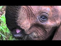 Education World: Video Roundup: Earth Day Elephant Gif, Preschool Jungle, Ivory Trade, Education World, National Geographic, The Time Is Now, Save Animals, Gentle Giant, Earth Day