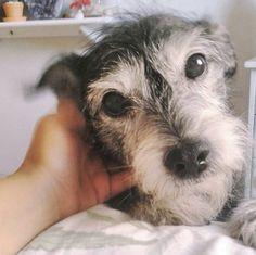 Ter o coração derretido toda vez que você faz um carinho nele. | 10 felicidades que só quem adotou um cachorro poderia viver