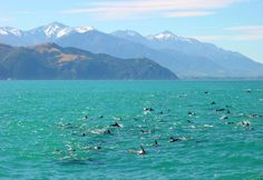 Kaikoura, New Zealand - one of the best places in the world to go whale watching and swimming with wild dolphins!!