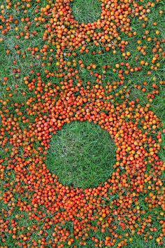 Green dots in Red - Dick Lubbersen, Atelier Recycled Art Projects, Art Projects For Teens, Land Art, Abstract Landscape, Landscape Paintings, Natural Architecture, Ephemeral Art, Preschool Art Activities, Sharpie Art