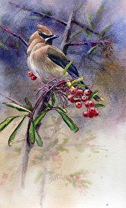 Cedar Waxwing by Joe Garcia Watercolor ~ 10.5 x 6.5