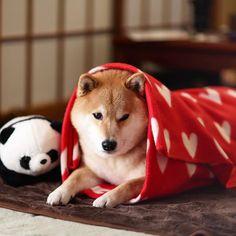 Panda and doge!!!!! <3