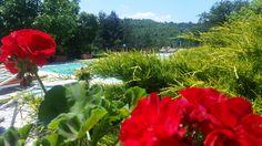 Tuscany Italy. Toscana Italia Casentino Toscana Italia, Plants, Plant, Planets