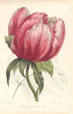 Vintage floral print.