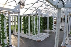 Chris Lukenbill of Fresh With Edge farms in Rochester, MN is one Upstart Farmer making headlines on Seedstock for his sustainable hydroponic farm.