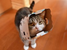 Maru:[It's me! This is a popular style now.] 4-3 私信