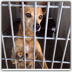 San Bernardino City Animal Control, CA~~~URGENT!!~~~~Donovan needs out NOW!  Please call 909-384-1304 to save him!~~ ID #A466076  Donovan is looking a little worried , you wo...
