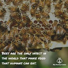 Did you know, bees are the only insect in the world that make food that humans…