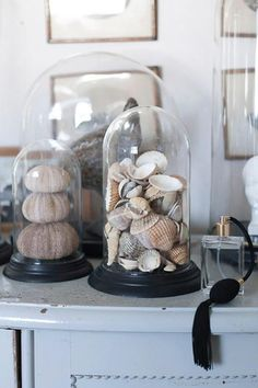On coffee table Glass Bell Jar, The Bell Jar, Glass Domes, Cabinet Of Curiosities, Shell Collection, Room To Grow, Apothecary Jars, Beach House Decor, Home Interior