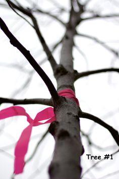 Sept 1- Tree #1
