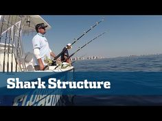 Florida Sport Fishing TV - Shark Fishing Tips How To Find Sharks Offshore - (More info on: https://1-W-W.COM/fishing/florida-sport-fishing-tv-shark-fishing-tips-how-to-find-sharks-offshore/)