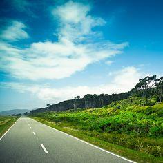 West Coast Road - New Zealand Landscape
