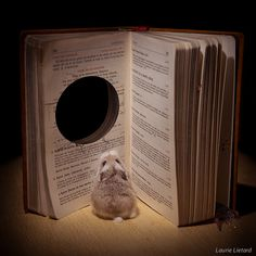 Roborovski Hamsters ♡ Group on Flickr! :D
