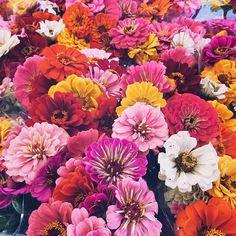 Swoon  #zinnias #unionsquaregreenmarket  #instaflowers #dsfloral #dscolor #flowers #flowergram #bloom #flower #zinnia #greenmarket #farmersmarket #slowflowers @unsqgreenmarket