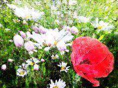 'flowery madow' von ursfoto bei artflakes.com als Poster oder Kunstdruck $16.63